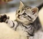 ネコが大声で泣いた日 【感動する話】