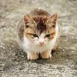 特等席だニャン! 車のボンネットに気持ちよさげに乗る猫(動画)